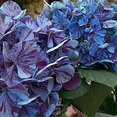 情報/買い物帰り👀📷✨/季節の花 💙おはよう  ございます💜  6月17日…