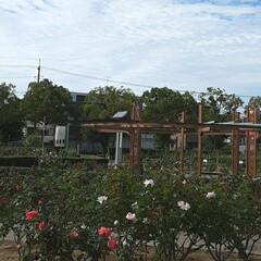 昨日/👀📷✨/もうすぐ秋の薔薇展/福山市/薔薇公園 🌹秋の薔薇展が10/24・25 日に  …(3枚目)
