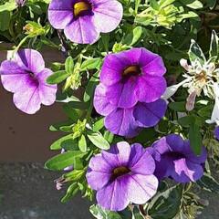 近所で/👀📷✨/季節の花/花 おはようございます☺  10月12日(月…