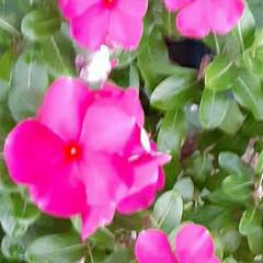 買い物に行く途中/👀📷✨/季節の花/花 おはようございます☺  9月18日(金)…
