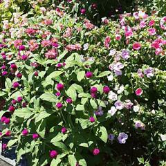 👀📷✨/買い物帰り/家庭菜園/季節の花/花 お花がモリモリのお庭を見つけました👀  …