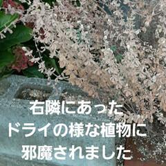 10月9日/👀📷✨/紫陽花が/色づいた おはようございます☺  10月27日(火…(4枚目)