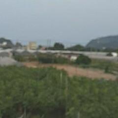 ビニールハウス/畑/芦田川/河川敷 先日、バナナの木の写真を撮った河川敷の …(4枚目)