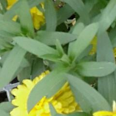 pi-🌴ちゃん🎵/おはよう/買い物に行く途中/👀📷✨/季節の花/花 おはようございます☺  9月26日(土)…