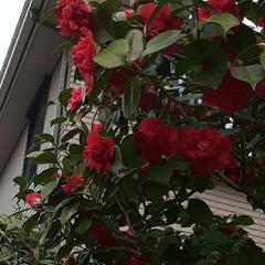 先日/近所で/👀📷✨ おはようございます☺  3月11日(木)…(1枚目)