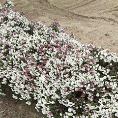 「出勤途中の畑に咲いてる  小さな菊、黄み…」(4枚目)