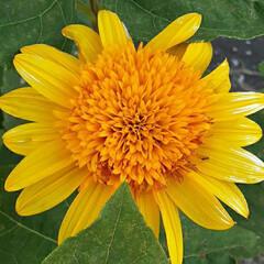 季節の花/近所を回って/👀📷✨ おはようございます☺  8月16日(日)…