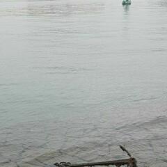 「先日、川沿いを下り、海に出た帰り  海岸…」(4枚目)