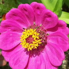 近所/👀📷✨/季節の花/花 おはようございます☺  8月27日(木)…