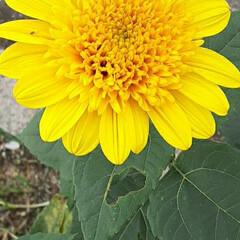 買い物に行く途中/👀📷✨/季節の花/花 おはようございます☺  9月28日(月)…