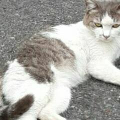 初めての/動物/👀📷✨/猫 近所の駐車場で、ゴロゴロしていた  ねこ…