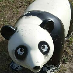 昨日/👀📷✨/芦田川 [パンダが2頭❔2体❔河川敷❗]   1…