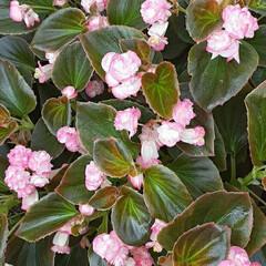 タイル絵/園児さんの作品/👀📷✨/保育園の花壇/季節の花/花 近くの保育園の入り口、  花壇に咲いてい…