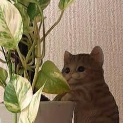 子猫のマイケルと/2~3倍に/成長/ポトス おはようございます☺  10月30日(金…(3枚目)
