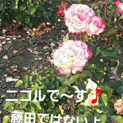 薔薇/ニコル/ボレロ/エフピコアリーナ/先日/👀📷✨ おはようございます☺☀️  12月11日…