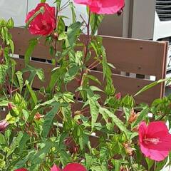 季節の花/花 買い物帰りに👀📷✨しました❤(3枚目)