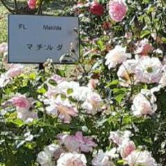先日/薔薇公園/👀📷✨ おはようございます☺  11月21日(日…(1枚目)
