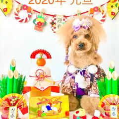 トリマー/リボン/犬服/ドッグウェア/わんこ/ドッグオーナー/... この写真を撮るために、我が家に来て半年後…