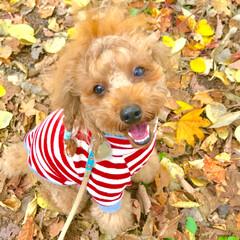 犬好きな人と繋がりたい/犬好き/犬と暮らす/散歩/犬のいる暮らし/笑顔/... いつもステキな笑顔をありがとう💕