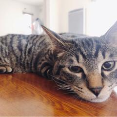 メンマ/猫がいる生活/ねこじゃらし/猫/猫が好き/にゃんこ同好会/... ぶちゃいく3連発ww それがめちゃめちゃ…