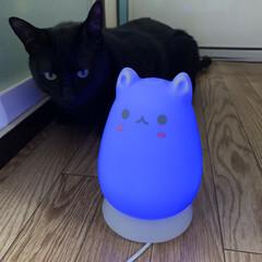 ウイルス対策/加湿器/ねこ雑貨/猫との暮らし/雑貨/おすすめアイテム/... 我が家の4頭目の猫に興味津々のマウくん。…(3枚目)