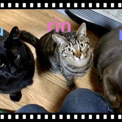 猫のいる幸せ/猫の日/保護猫 猫の日。 今日も幸せな1日でした🐾