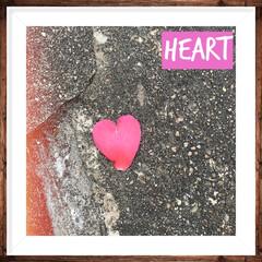 道に落ちているもの/花びら/写真加工遊び/かわいい/小さな幸せ/ハート/... 家周り掃除してたら、ハートの花びら発見💕…