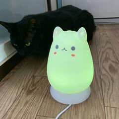 ウイルス対策/加湿器/ねこ雑貨/猫との暮らし/雑貨/おすすめアイテム/... 我が家の4頭目の猫に興味津々のマウくん。…(2枚目)