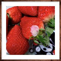 かわいい/小さな幸せ/いちごの花びら/くまもん/🍘/果物/... 🍓いちご買ったら、花びらがついてて。 か…