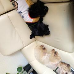 犬大好き/犬との暮らし/犬派 ただ今お昼寝中💤 完全にイッちゃってます😂(3枚目)