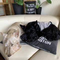 ペットとの暮らし 今日の昼寝…zzZ(1枚目)