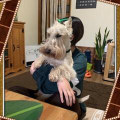 わんこのいる暮らし/犬大好き/ペットのいる暮らし 見てたら小型犬☝️ 抱っこしたら大型犬🐶…(1枚目)