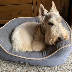 犬との暮らし/犬好き/犬派 今日は2ワンの暑さ対策☀️ 3mmでバリ…(1枚目)