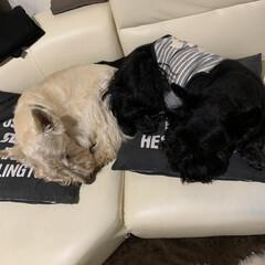 ペットとの暮らし 今日の寝姿…zzZ(1枚目)