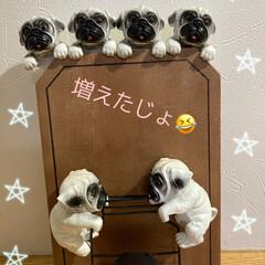 飾り/パグさん/犬 キャンドゥ〜連れて来ちゃったぁ〜💕 3人…