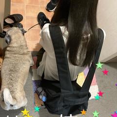 パグさん/日常/姉妹/20歳/バースデー/犬 今日は長女の20歳のバースデー💕🤎💕🤎 …(3枚目)