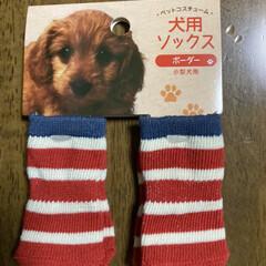 犬用靴下 キャンドゥに行ったら赤い靴下見つけたよ!…(2枚目)