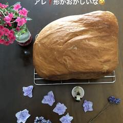 お家時間/ドライ/紫陽花/バジル/焼き立てパン/パグさん お友達にベランダで取れたバジルを頂いたの…