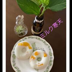 シリコン型/休日/お家時間/パグさん/ミルク寒天/牛乳 おはよん💖ございます 朝イチでミルク寒天…