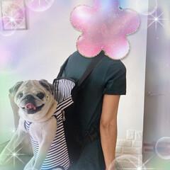 10キロ超え/犬のいる生活/雨の日のお出かけ/犬用抱っこ紐 まゆみさんの投稿を見て☝️ どーしても可…(2枚目)