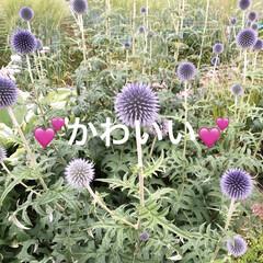 お花/お散歩 可愛くてパチリ!