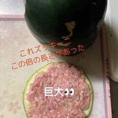 ハンバーグ/ズッキーニ/おからパウダー/夕飯 今日はおからハンバーグ❣️ 巨大ズッキー…
