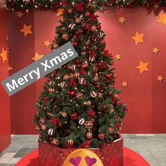 ガトーショコラ/チーズケーキ/お家時間/手作りケーキ/クリスマスイヴ/3COINS/... 今日はクリスマスイヴですね!  みんなに…