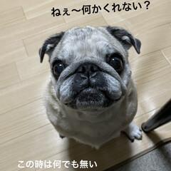 お家時間/犬の目の病気/癒し/犬のいる暮らし まろんさんあれこれ〜  左目からめやにが…(2枚目)