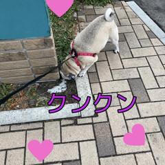 加湿器/アロマオイル/犬のいる生活/リビング 加湿器をポチッと! 届いたら小ささに驚き…(4枚目)