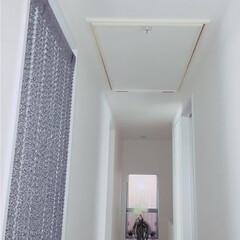 ハシゴ/天井裏収納/天井/収納/暮らし 二階の天井に 屋根裏部屋をつくってもらい…