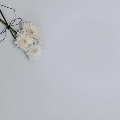 モノトーン好き/スッキリ暮らす/お花/ダイソー/セリア/100均/...  ͙❁˚ ͙❁˚ Flower ͙❁˚ …