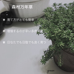 コンクリート鉢/グリーンのある暮らし/多肉植物/暮らしを楽しむ/おしゃれ/暮らし 🌿多肉植物の森村万年草🌿 なんでも枯らす…