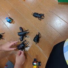 「虫が嫌いなのに・・・子ども達がオモチャを…」(2枚目)