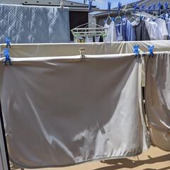 「洗濯おわり!!いやー、おねしょシーツ大量…」(1枚目)